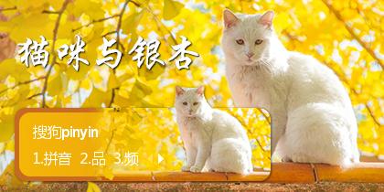 猫咪与银杏