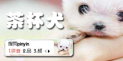【羽】茶杯犬